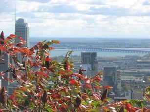 Vue depuis le Mont Royal, avec des feuilles